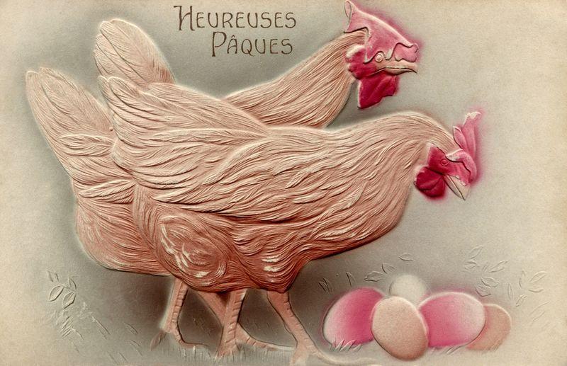 Pink_chicks